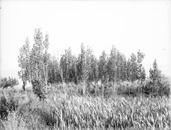 Botany trees