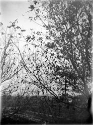 Botany - trees